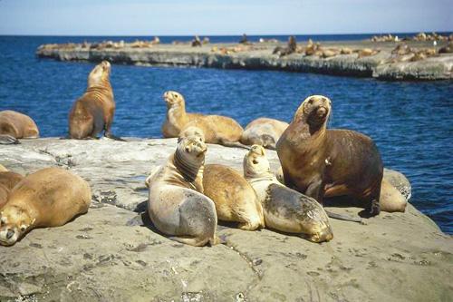 Patagônia 2009: A fauna da PenínsulaValdez