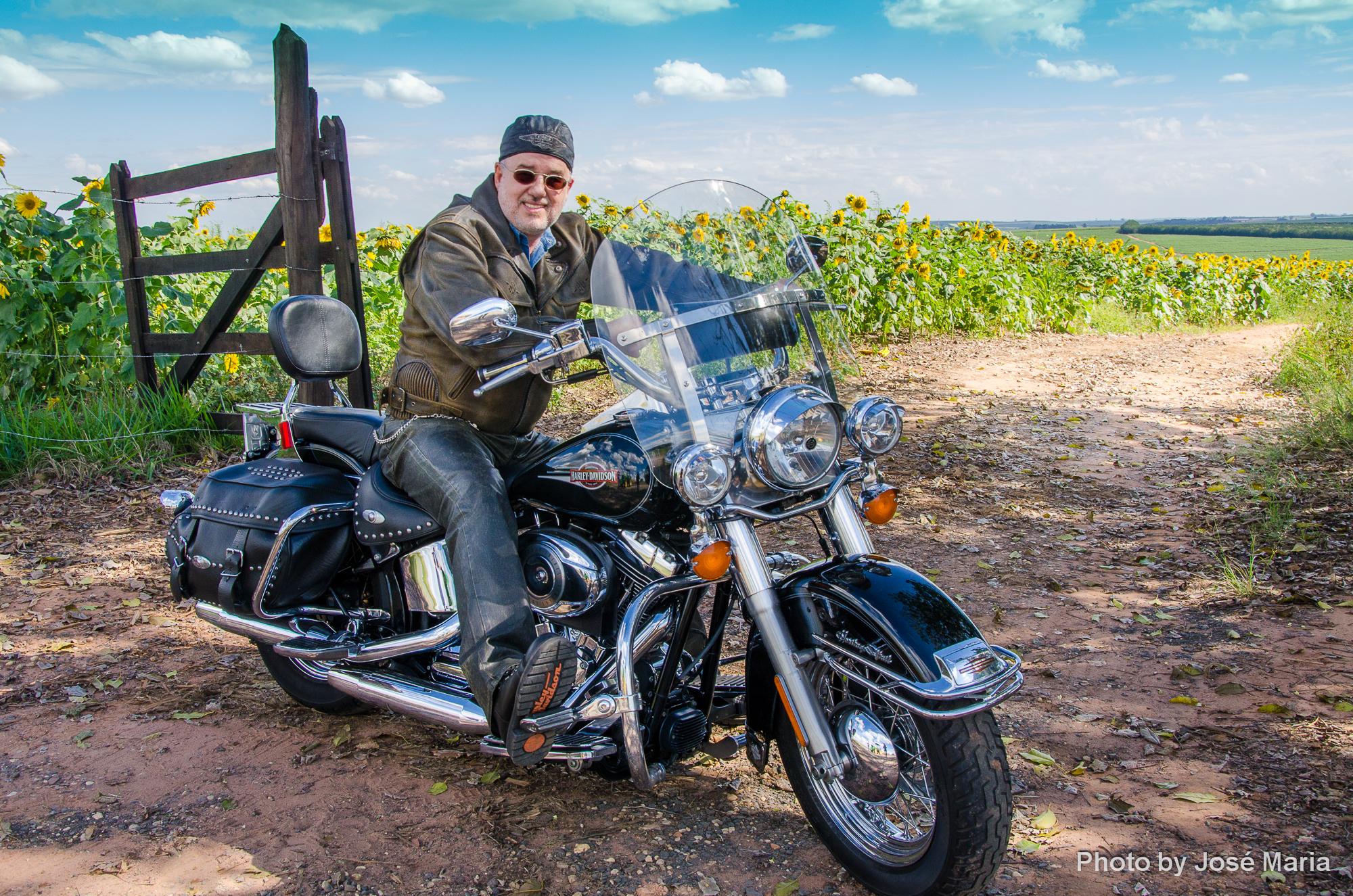 De Harley em um Campo de Girassóis