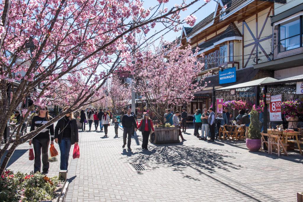 Florada de Cerejeiras em Campos do Jordâo